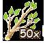 breedingmar2016branch50.png